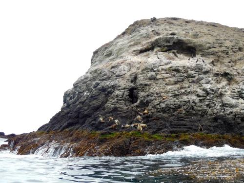 Sea Lions at Santa Barbara Island