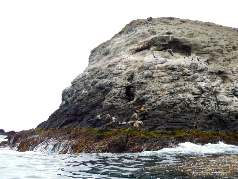 Sea Lions at Santa Barbara Island