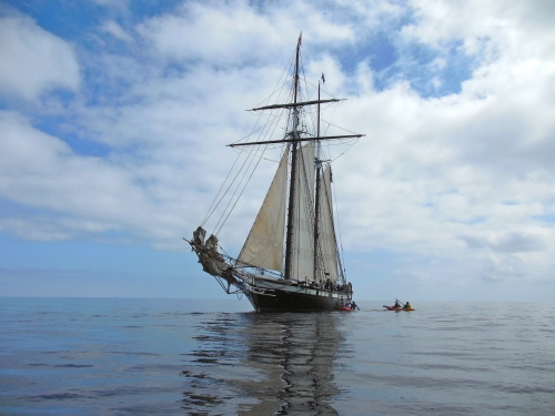 Californian Sailing to Catalina
